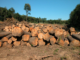 Timber from managed forests